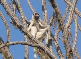 Cactus-like plants of Berenty