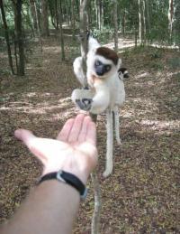 Reaching across species