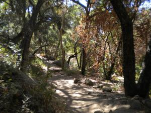 Cold Spring Trail and its trees