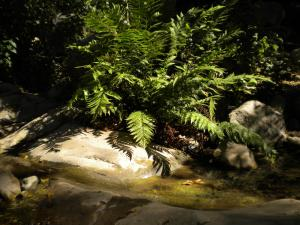 Fern beside a trickle of water