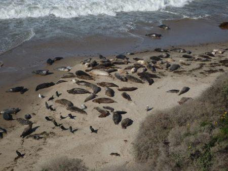 Carp. Seals