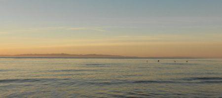 Pelicans Santa Cruz
