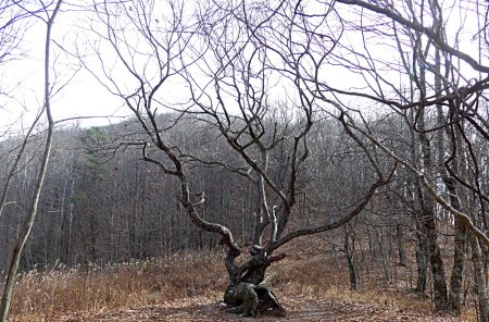 The Tree At Bly Gap