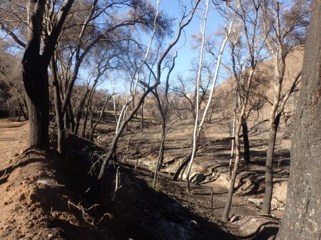 Camuesa Valley after the Rey Fire