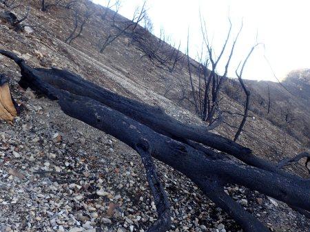 Santa Cruz Trail, back side of Little Pine